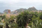 view-cacti